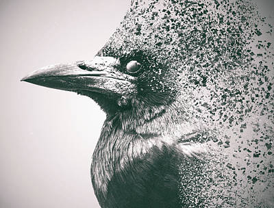 Human Head Photograph - Crow Dispersion by Martin Newman