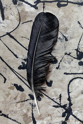 Brown And Sepia Ravens Photograph - Crow Feather Midnight Black by Carol Leigh