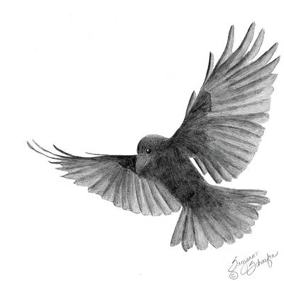 Drawing - Crow In Flight by Suzanne Schaefer
