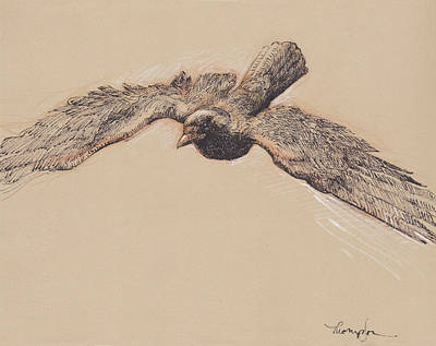 Crow Drawing - Crow In Flight by Tracie Thompson