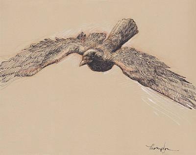 Crow In Flight Original