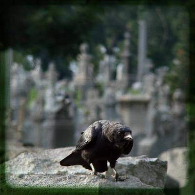 Ravens In Graveyard Photograph - Crow In The City Of Stone by Gothicrow Images