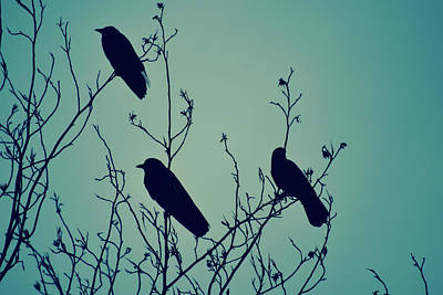 Crow Photograph - Crow Inteal by Heather Joyce Morrill