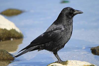 Photograph - Crow Observing by Elenarts - Elena Duvernay photo