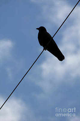 Photograph - Crow On A Wire by Donna L Munro
