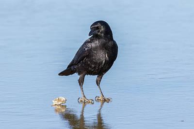 Photograph - Crow On Ice by Tony Hake