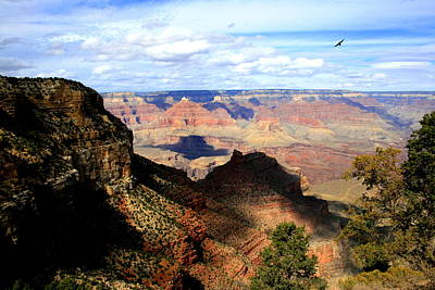 Photograph - Crow Over The Canyon by Christopher Kirby