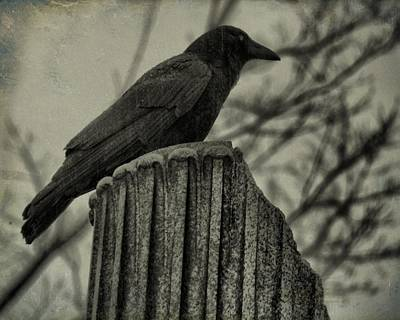 Rainy Day Photograph - Crow Perched On A Old Column In Rain by Gothicrow Images