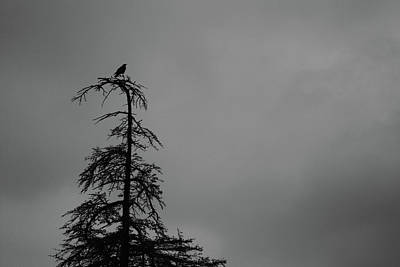Crow Perched On Tree Top - Black And White Art Print