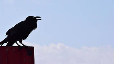 Photograph - Crow Profile by Sandy Taylor