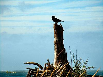 Photograph - Crow Watch by Sadie Reneau