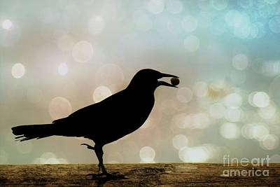 Photograph - Crow With Pistachio by Benanne Stiens
