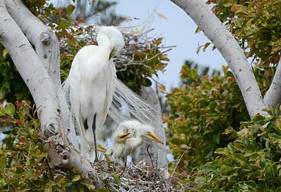 Photograph - Crowded Nest by Fraida Gutovich