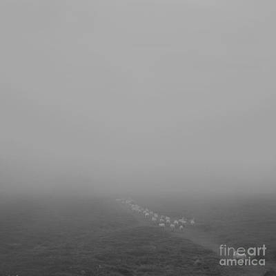 Photograph - Descending To Sheep In The Clouds by Paul Davenport