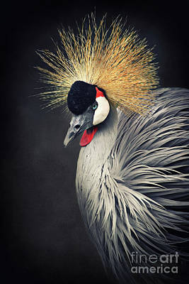 Crane Mixed Media - Crown Crane by Angela Doelling AD DESIGN Photo and PhotoArt