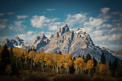 Metal Tree Photograph - Crown For Tetons by Edgars Erglis