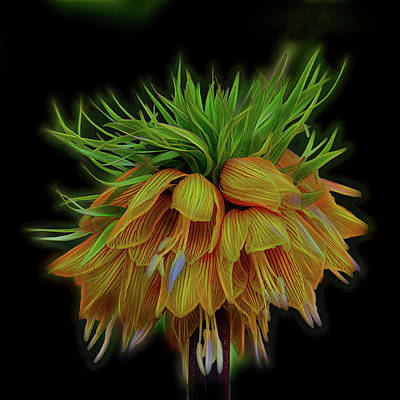 Digital Art - Crown Imperial by Richard Farrington