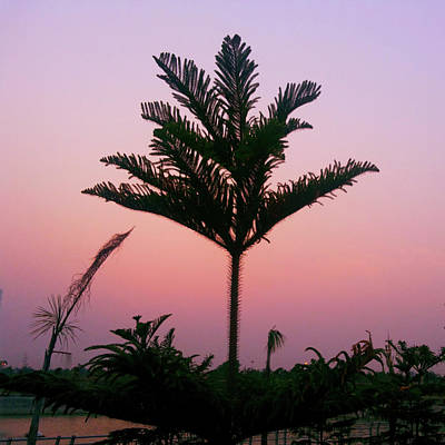 Photograph - Crown In Pink Sky by Atullya N Srivastava