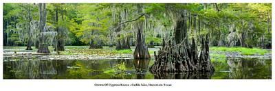 Crown Of Cypress Knees Art Print by Geoff Mckay