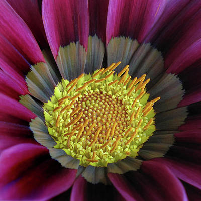 Photograph - Crown Of Pollen by David and Carol Kelly