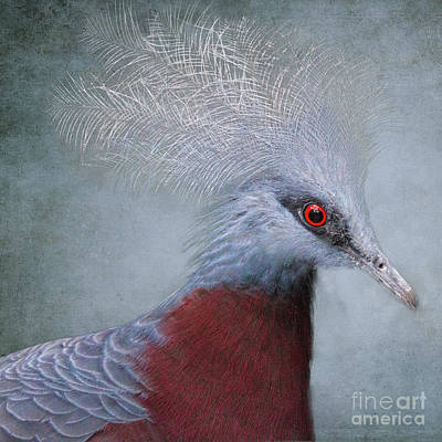 Photograph - Crowned Pigeon by Heiko Koehrer-Wagner