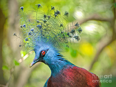 Photograph - Crowning Glory by Judy Kay