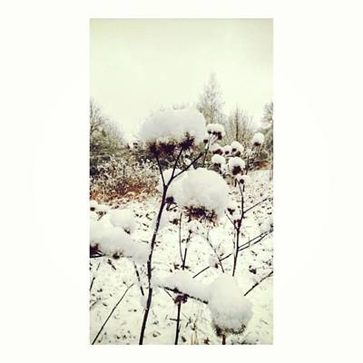 Florals Photograph - Crowns Of Snow