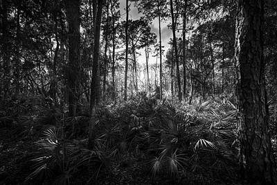 Cypress Swamp Photograph - Crows Call by Marvin Spates