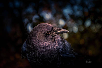 Photograph - Crows Eye View by Bill Posner