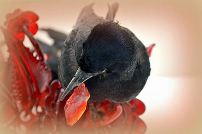 Photograph - Crow's Feast by Lori Seaman