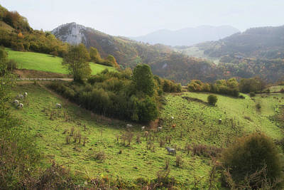 Photograph - Cows Grazing In The French Pyrenees by Jean Gill