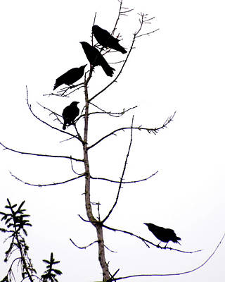 Photograph - Crows In A Tree by Ken Stampfer