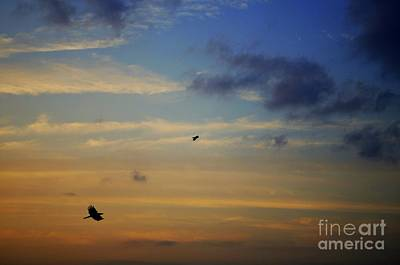 Photograph - Crows In Flight by Dean Harte