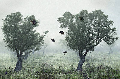 Mist Wall Art - Photograph - Crows In The Mist by S. Amer