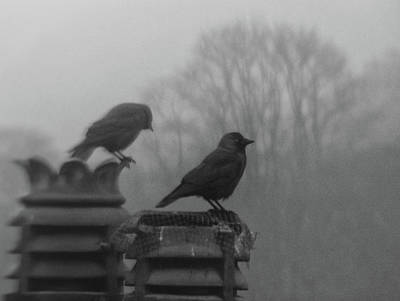 Two Crows Photograph - Crows On Chimney Tops by Philip Openshaw