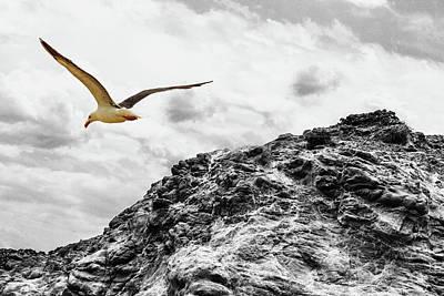 Photograph - Cruising Bw by Robert Hebert