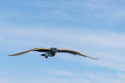 Photograph - Cruising by Derek Dean