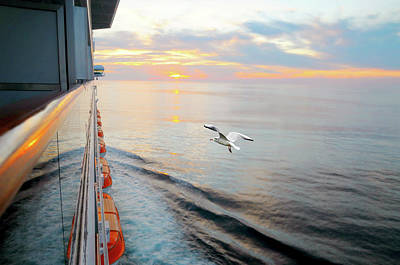 Photograph - The Cruise by Diana Angstadt