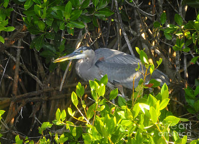 Photograph - Cruising The Mangroves by David Lee Thompson