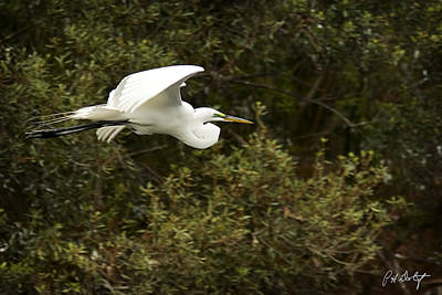 Bird Photograph - Cruising The Rookery by Phill Doherty