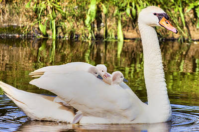 Baby Photograph - Cruising With Mom by Nadia Sanowar