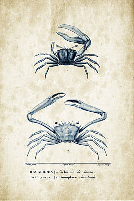 Fresh Shrimp Wall Art - Digital Art - Crustaceans - 1825 - 11 by Aged Pixel