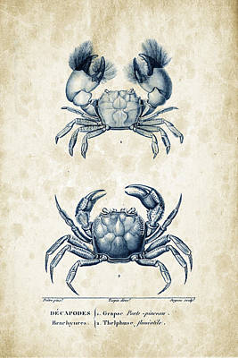Fresh Shrimp Wall Art - Digital Art - Crustaceans - 1825 - 13 by Aged Pixel