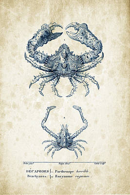 Fresh Shrimp Wall Art - Digital Art - Crustaceans - 1825 - 18 by Aged Pixel