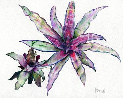 Painting - Cryptanthus Richard Lum by Penrith Goff