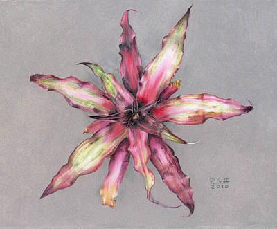 Cryptanthus Strawberry Shortcake Art Print