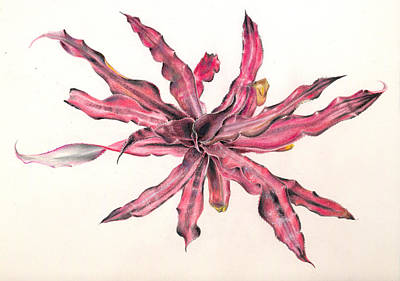 Painting - Cryptanthus Volcano by Penrith Goff