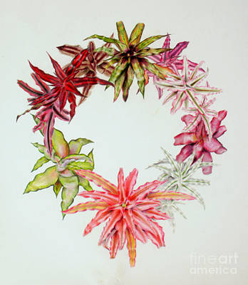 Painting - Cryptanthus Wreath by Penrith Goff