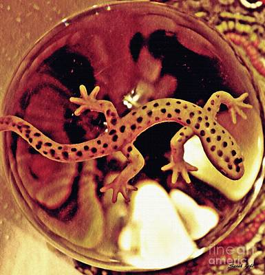 Salamanders Photograph - Crystal Ball Project 28 by Sarah Loft