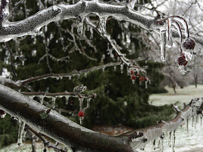 Haverford Photograph - Crystal Jaws by Clay Cofer